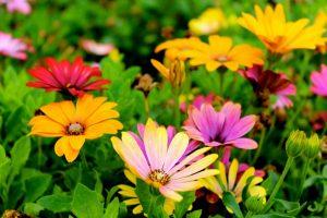 beautiful-blooming-blossom-blur-298246