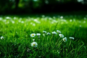 blooming-blossom-blur-bright-409696