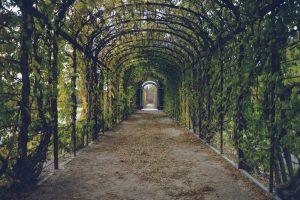 walking-path-way-tunnel-59599